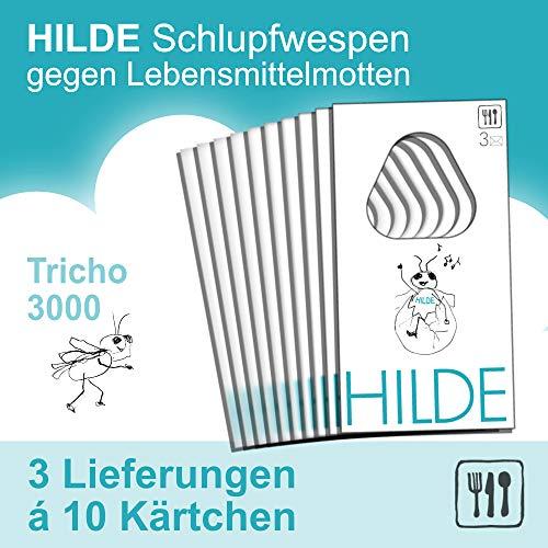 Mottenshop24 ***Hilde*** Schlupfwespen gegen Lebensmittelmotten 3x10 Karten | natürlich - wirksam - chemiefrei - schonend