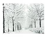 Northlight 15.75 Fiber Optic Lighted Twinkling Snowy Winter Tree Scene Canvas Wall Art
