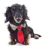 【kamakura dog】Bチェックハーネス 犬 ネクタイ おしゃれ チェック柄 (ネイビー, S)