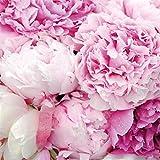 Tovaglioli di carta monouso, Bellezza Rosa, 20 pezzi 3 strati - 33 x 33