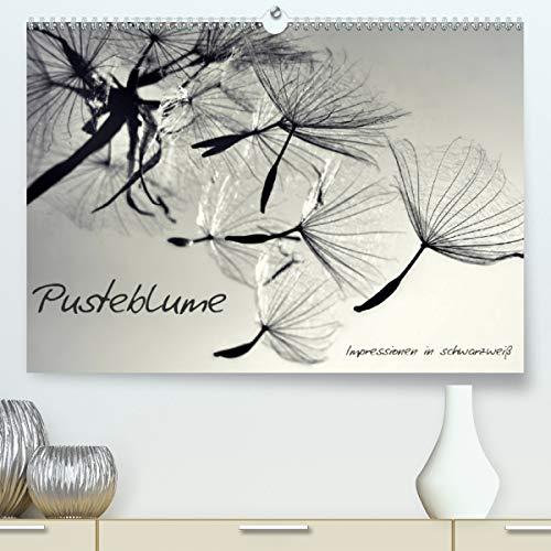 Pusteblume - Impressionen in schwarzweiß (Premium, hochwertiger DIN A2 Wandkalender 2021, Kunstdruck in Hochglanz)
