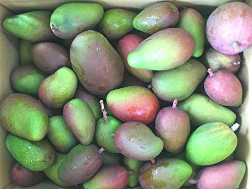 ☆コロナに負けるな☆ 2021年度 宮古島産 外国人に人気の青い固いマンゴー (摘果マンゴー) 5Kg