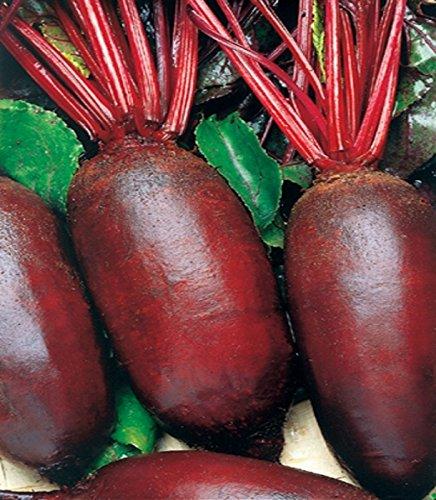 Rote Rüben Rote Beete Forono lange Samen
