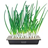 Hamama Home Green Onion Kit, Regrow Fresh Green Onions Indoors Every Week, 30-Second Setup, Just Add Water, Green Onion Ends. Includes Growing Tray, Coco Fiber Mats, Easy Instructions. Cooking Gift.