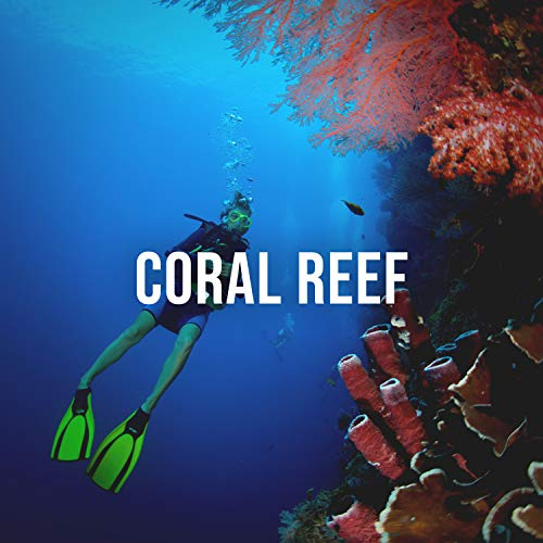 Coral Reef: Feel the Purifying Power of the Ocean as You Dive Through the Coral Reef, White Noise for the Imagination