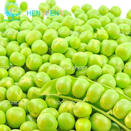 En vente 10pcs Japon Green Magic Bean Seeds Vegetable Seed Bonsai Floraison Jardin Planter haute herbe Taux