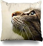 Throw Pillow Cover Play Brown Interesante Cat Head Only Nature Fauna Close Beautiful Inside Life Design Funda de cojín para el hogar Funda de Almohada Cuadrada Decorativ16x16pulgada
