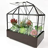 "Large Tall Plant Terrarium Glass – Glass Greenhouse Terrarium with Lid and Tray,Indoor Tabletop Orchid Succulent Cacti Terrarium Kit 9.5""X9.8""X5.6"" NA (Black C)"