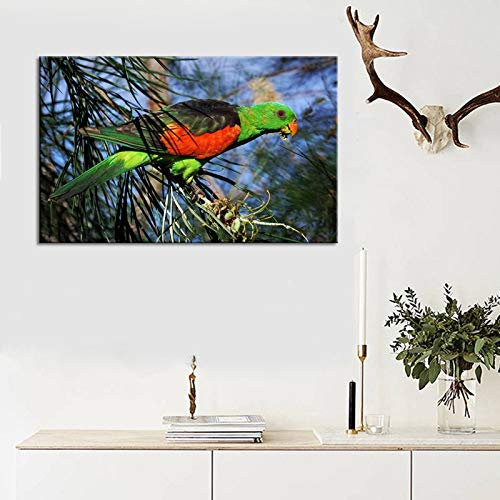 ganlanshu Moderne Tierplakate und Drucke auf der Leinwand der Heimdekoration bemalten Bunte Papageien,Rahmenlose Malerei,40X60cm