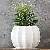 MyGift 5-inch White Ceramic Round Cactus...