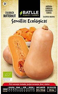 Semillas ecológicas de Calabaza butternut