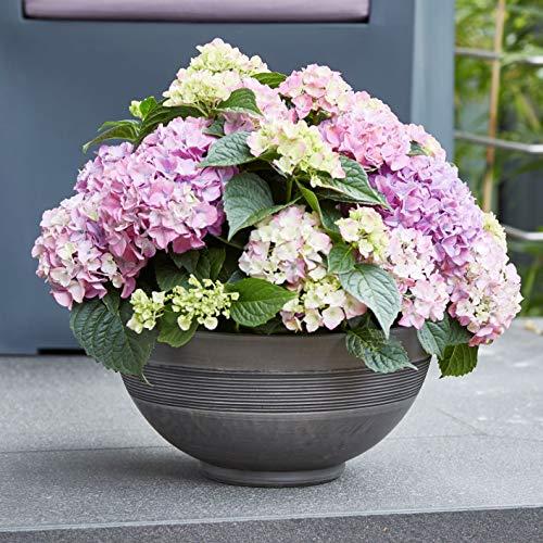 Pflanzschale Harmonie anthrazit Ø 50 cm Pflanz Schale Blumen Pflanzgefäß neu
