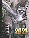 2021 Planner: Raccoon in Tree Photo - Nature Animal Wildlife / Daily Weekly Monthly / Dated 8.5x11 Life Organizer Notebook / 12 Month Calendar - Jan ... / Cute Christmas Gift for High Performance