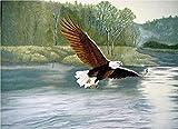 Pintura Por Números Pintura Para Adultos Blanco Negro Águila Calva Animal Lienzo Kit Diy Pintura Al óleo Para Principiante 40*50Cm