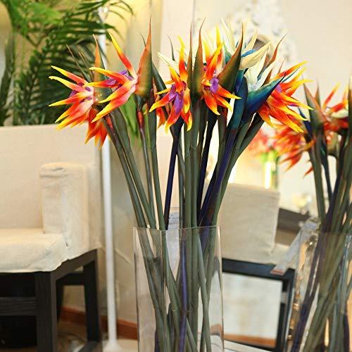 Strelitzia reginae semillas macetas de flores plantadores Todas las clases de color híbrido de ave del paraíso Bonsai plantas Semillas 50pcs