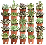 Costa Farms Mini Succulents Fully Rooted Live...