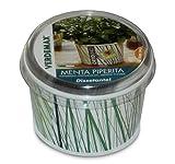 Vaso para hierbas aromáticas con aroma de menta