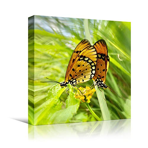 bestdeal depot Butterfly V Expressive Farmhouse/Country Home Office Insects Lake Multicolor Photography Wall Art Prints for Living Room,Bedroom Ready to Hang - 16x16 inches