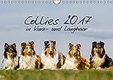 Collies 2017 in Kurz- und Langhaar (Wandkalender 2017 DIN A4 quer): Ein Kalender für alle Collie- und Hundefreunde (Monatskalender, 14 Seiten ) (CALVENDO Tiere)