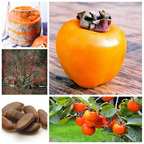 AGROBITS 15 pcs/Bag Exotic Persimmon Fruit Tree Outdoor Non-GMO Juicy Bonsai Potted Diospyros Kaki fruta Planta Seedsfor Home Garden