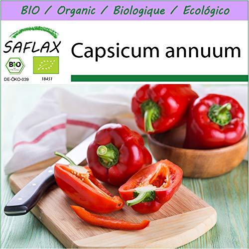 SAFLAX - BIO - Paprika - California Wonder - Rot - 20 Samen - Capsicum annuum