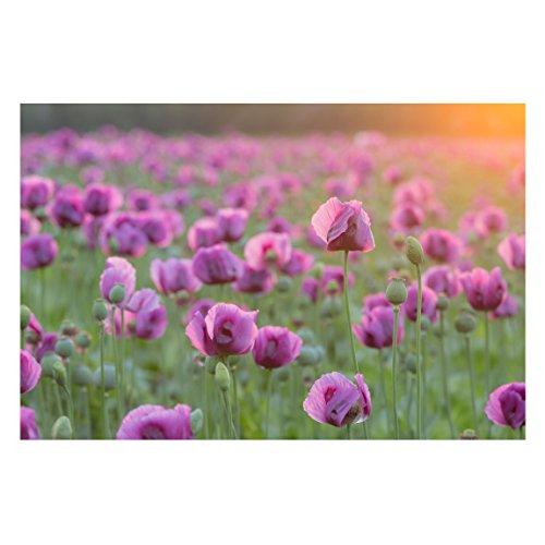 Tapete Violette Schlafmohn Blumenwiese im Frühling Premium, HxB: 255cm x 384cm