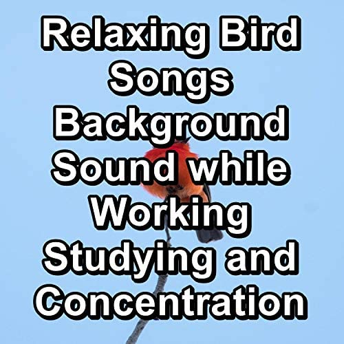 Bird Songs, Nature Sounds & Calm Singing Brids Zone