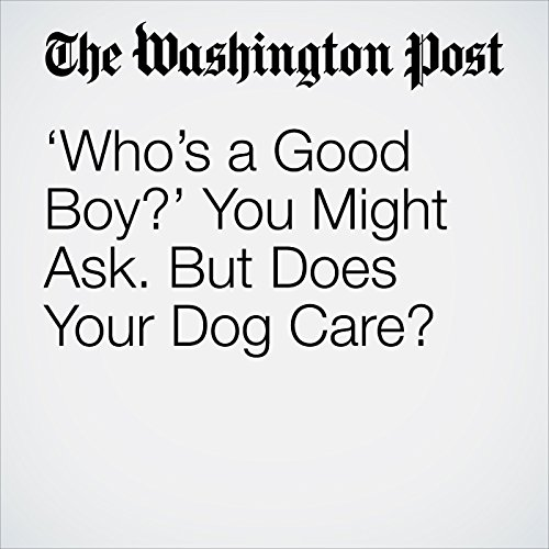 'Who's a Good Boy?' You Might Ask. But Does Your Dog Care? audiobook cover art