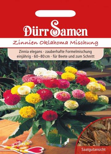Dürr Samen 1927 Zinnie Oklahoma Mischung (Zinniensamen)