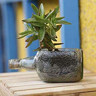 Kavi The Poetry-Art Project Recycled Rum Bottle Planter (Multicolour)