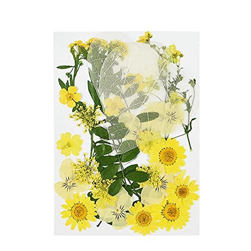 1PC Piccoli fiori secchi pressati Margherita Flower Festival Party Home DIY Scrapbooking Decorazione Dry Daisy Flowers Decor Supplies 8z-B08