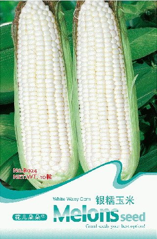 3 Packs 30 Of White Waxy Corn Seeds, maïs blanc semences de légumes sains B024