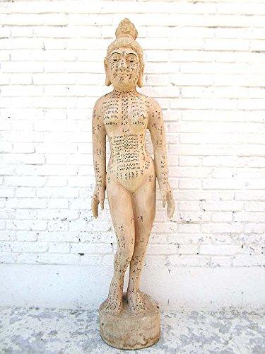 Chine 1930 médecine frauenkörper enseignement grand lehrmodell acupuncture du corps bois de luxe-park