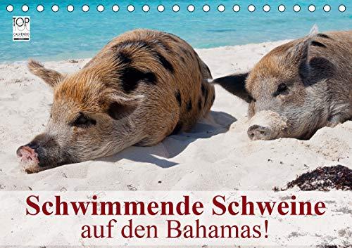 Schwimmende Schweine auf den Bahamas! (Tischkalender 2021 DIN A5 quer)