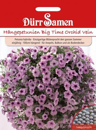 Dürr-Samen Hängepetunien Big Time Orchid Vein