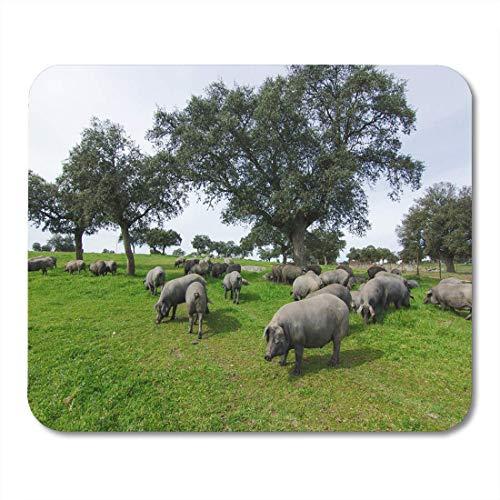 Muismat Black Field Iberian Pigs in het Spaanse landschap, groen voor notebooks, bureau-onderlegger