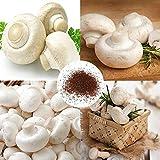 Planta Flor Vegetal Fruto Árbol Semillas 100pcs/Bag Semillas de setas blancas Productivas Esporas Nutritivas Semillas de Vegetales Viables para Jardín - Semillas de Setas Blancas