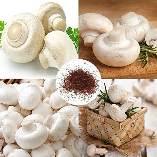 Weißer Pilz Samen, 100Pcs / Beutel Weißer Pilz Samen Produktive Nahrhafte Spores Spawn führbare Gemüsesämlinge für Garten