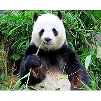 QMGLBG 5Dダイヤモンド塗装 動物パンダ食べる竹ダイヤモンド絵画ラインストーンクロスステッチクラフト装飾用品30*40cm