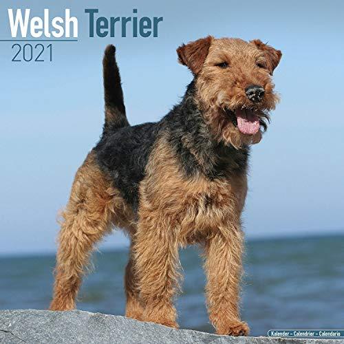 Welsh Terrier Calendar - Dog Breed Calendars - 2020 - 2021 wall calendars - 16 Month by Avonside