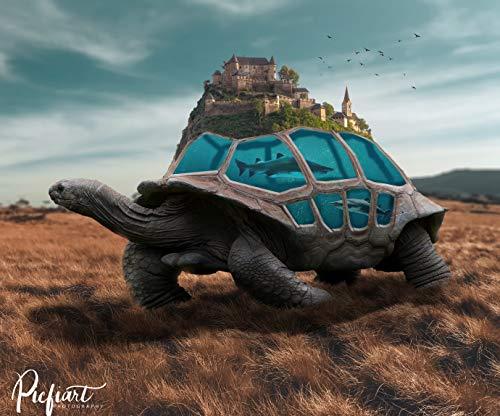 """Wandbild """"One World"""" von Picfiart, Motiv: Schildkröte – Fotos/Bilder, Poster"""