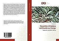 Corymbia citriodora acclimatée au Congo: Source de citronellal (>90 %)