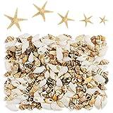 Yexpress 186 pcs Mini Tiny Sea Shells Mixed Ocean Beach Seashells, Natural Starfish for Home Decorations, Beach Theme Party, Candle Making, Wedding Decor, DIY Crafts, Fish Tank and Vase Filler
