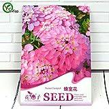 高品質イベリスアマラ種子盆栽フラワー種子鉢植え植物花50粒子/バッグE014