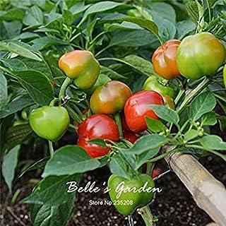 300PCSチリパイピーマンの種ピーマンベル野菜の種ホームガーデン工場DIY#W43