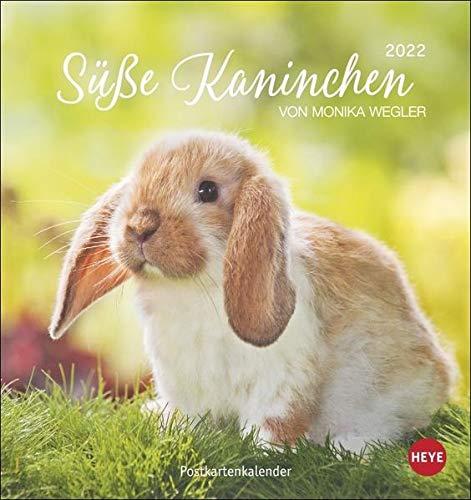 Süße Kaninchen Postkartenkalender 2022 von Monika Wegler - Tierkalender mit perforierten Postkarten - zum Aufstellen und Aufhängen - mit Monatskalendarium - 16 x 17 cm