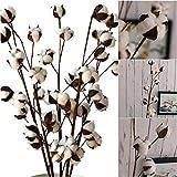 Flores artificiales secas de algodón DIY flores artificiales de simulación de flores...