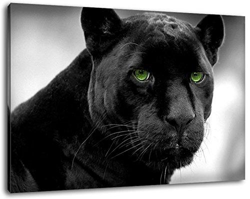 Pantera negro con los ojos verdes Formato: 120x80 cm pintura cubierta sobre lienzo, enormes imágenes XXL completamente terminados y enmarcados con camilla, impresión Arte en cuadro de la pared con el marco, más barato que la pintura o la fotografía, no hay carteles o póster