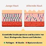 Collagen mit Elastin und Hyaluronsäure - Kollagen Hydrolysat Peptide Type I, II und III, Ohne Zusatzstoffe - 450 Gramm Pulver (vanilla)