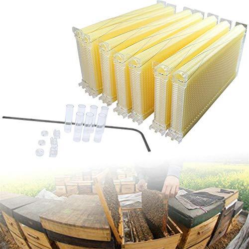 7 alveari, produzione automatica di miele, alveare, apicoltura Hive Beehive Frame con 7 cornici mobili.